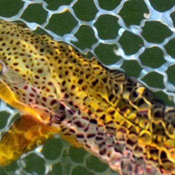 Missouri River March Fishing Forecast