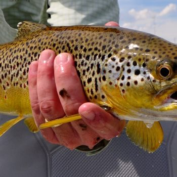 Weekend Fly Fishing Report
