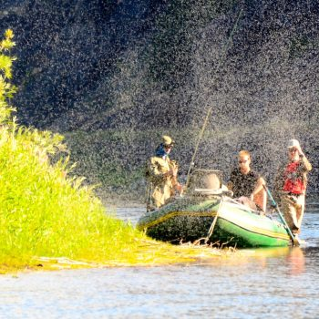 July Trico's Missouri River Fishing Report