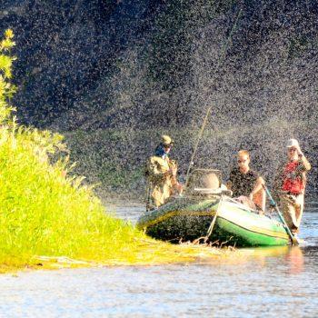 July Trico's Missouri River Fishing Report
