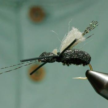 Longhorn Beetle Just Add Vise Video