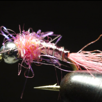 Pink Lightening Bug JAV Video