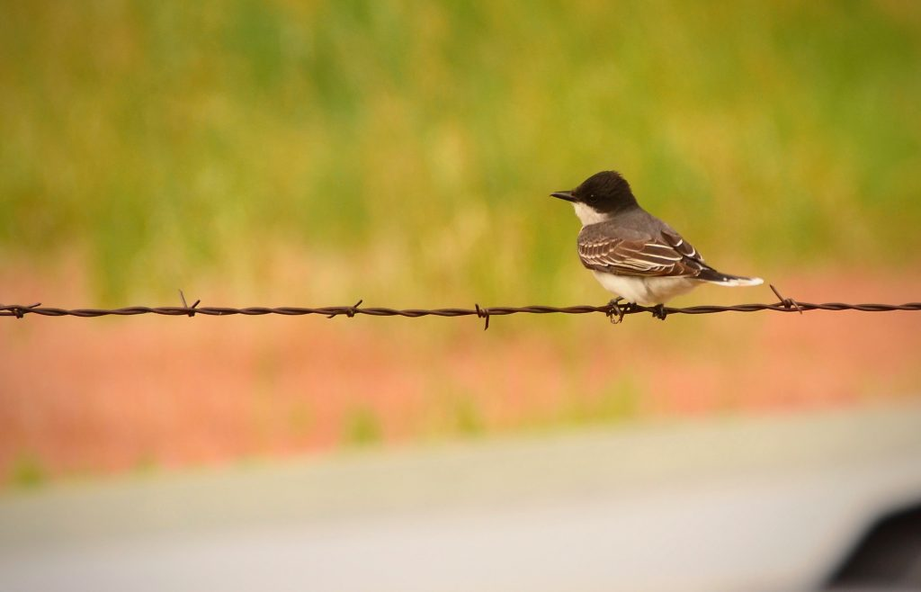Thursday Missouri River Foto Bird on a Wire