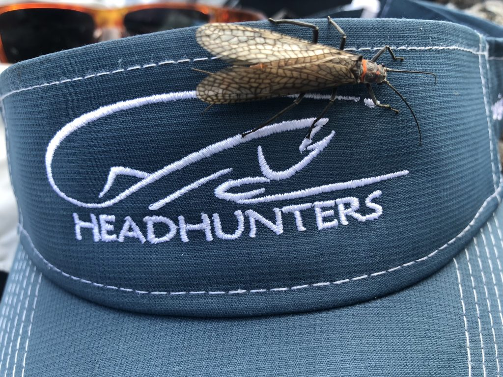 Silly Sunday Scenery Headhunters & Salmon Fly