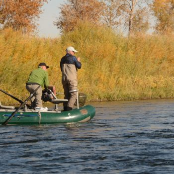 November 8th Missouri River Fishing Report