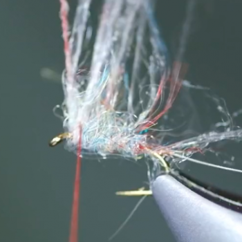 Thursday Tying Video Tailwater Sowbug
