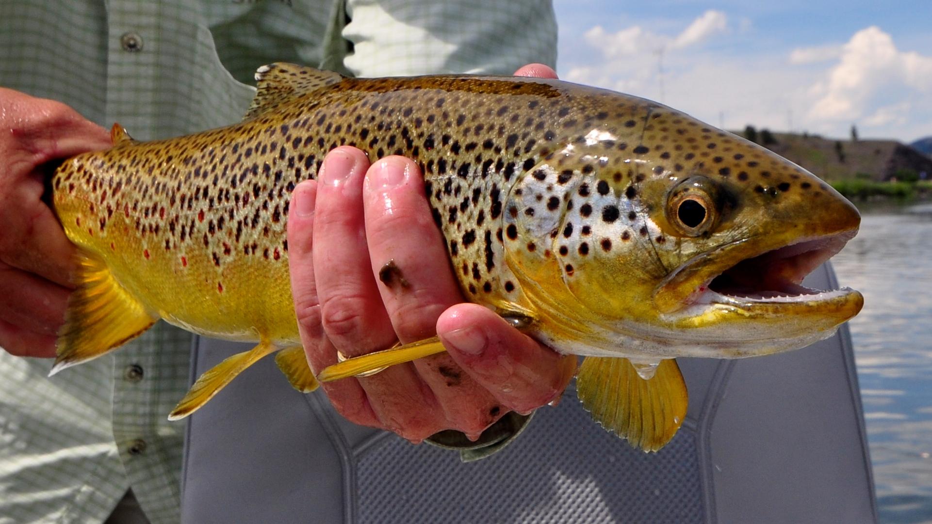 Missouri River Mid Week Fishing Report 9.30.20