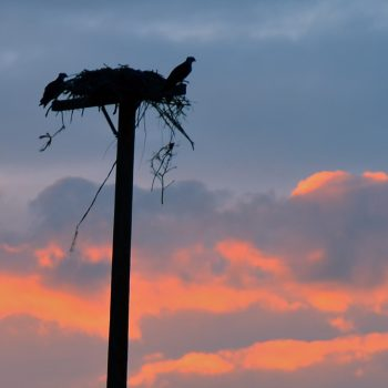 Friday Foto Osprey are Home