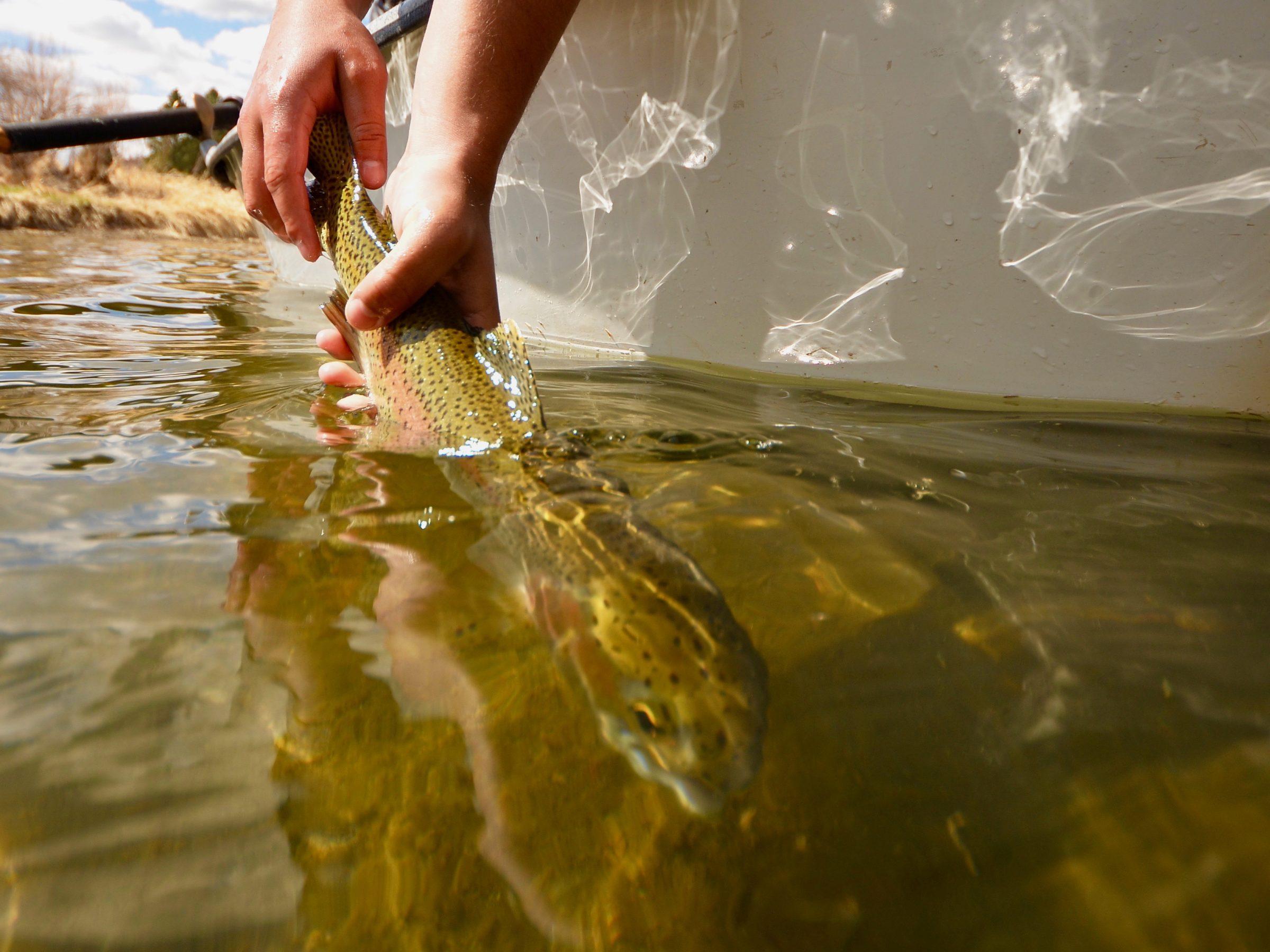 Missouri River Fishing Report 4.29.21