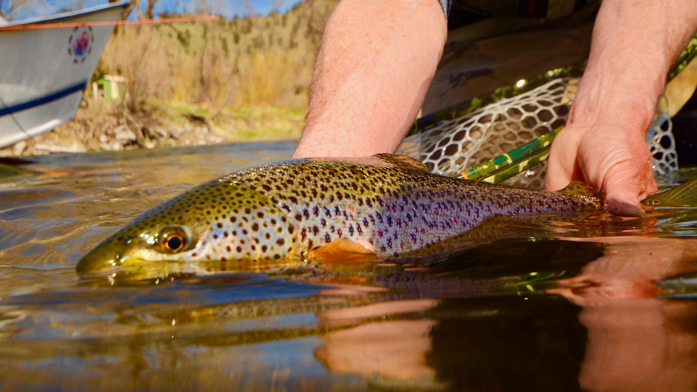 Silly Saturday Scenery Brown Trout